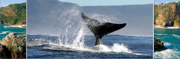 whale_banner